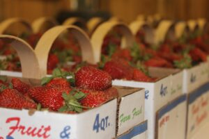 The annual Strawberry Festival will be held at the Cherokee Indian Fairgrounds on Saturday, May 17.  (SCOTT MCKIE B.P./One Feather)