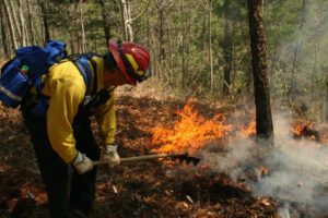 A wildland firefighter monitors a controlled burn in the Great Smoky Mountains National Park.  (NPS photo)
