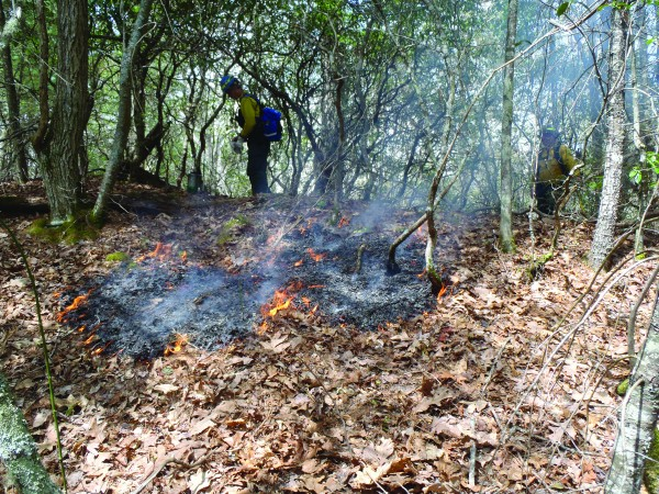 Wildland firefighters monitor a previous prescribed burn in the Cataloochee area.   (NPS photo)