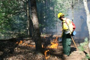 A firefighter uses a drip torch to ignite during a prescribed burn in the Great Smoky Mountains National Park.  (NPS photo)