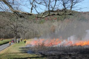 PREVENTION: A previous prescribed fire burns in Cades Cove.  One is planned this week for Oct. 4-6.  (NPS photo)